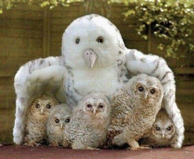 Real Baby Owls Hiding Under A Stuffed Animal Owl Mama Too C