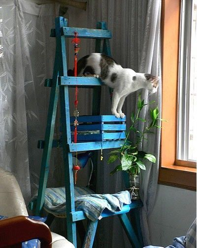diy cat tree (ladder, wine box, piece of wood)... beautiful!