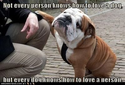 #love #dog #bulldog