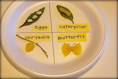 Life cycle of a butterfly using beans and pasta