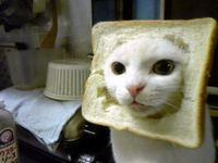 Cat with it's head in bread.