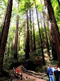 Muir Woods National Monument - travel guide and self guided walking tour