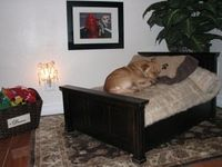 "A ""real"" dog bed. On the HomeGoods website."