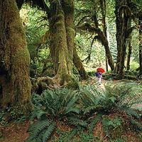 Best Olympic National Park hiking with Sunset Magazine