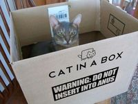 cat in a box. WARNING!......... um wtf?