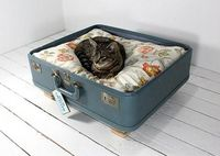 Suitcase cat bed. Love it.