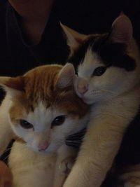 My friend's cats during Skype chat