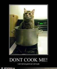 Don't cook the cute kitty!