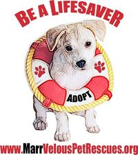 Be this puppy's life preserver.