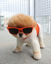 Hipster Puppies on Hipster Puppies