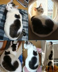a cat on a cat. CATCEPTION.