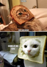 bread cats, carbodorable