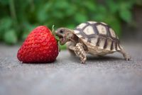 Hungry turtle