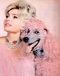 Zsa Zsa Gabor and smiley pink standard poodle