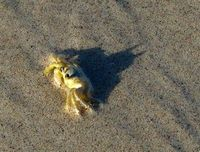 Crab is secretly Batman.