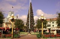 Giant Main St. Tree