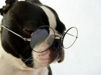 dog in spectacles