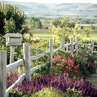 beautiful fence contrast with flowers