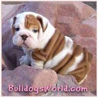 Gifts and t-shirts for bulldogs, bulldog lovers, animal lovers from cafepress.com