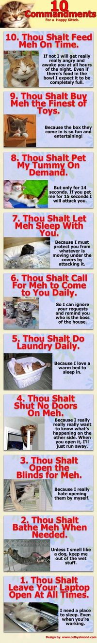 Kitty Commandments #cute #funny #cats #rules