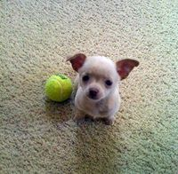 Fetch This Ball?