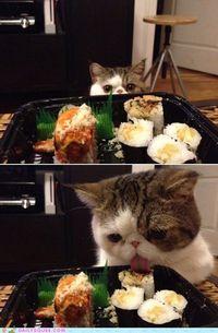 Yum Sushi~