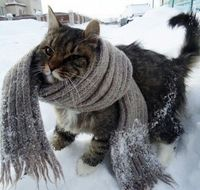 I don't even like cats, but this is perfect!