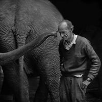 elephant with elderly trainer