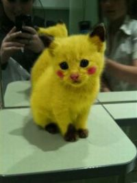 pikacat! awful and yet so hilarious.