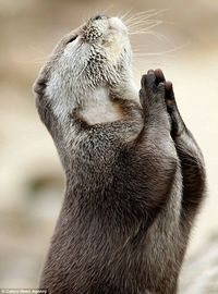 Dear God, please bring me a fish!