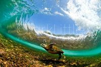 clark little of a HONU.. photography